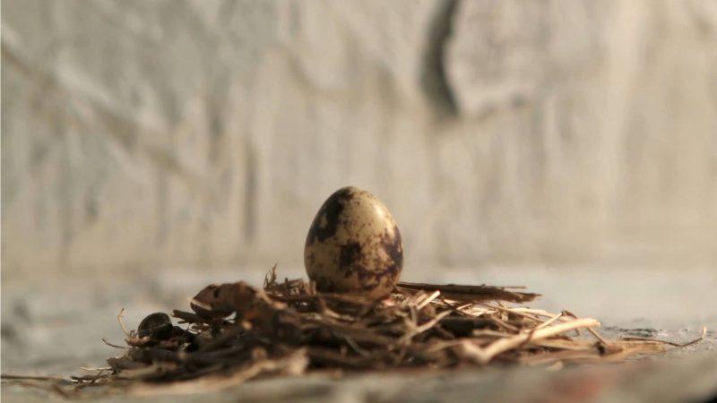 Ganymed in Power Dracophobia, Film und Musik von Benny Omerzell